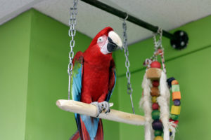 Sal the Macaw
