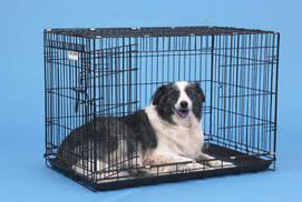dog in wire frame crate