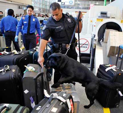 bomb sniffing dog with airport luggage