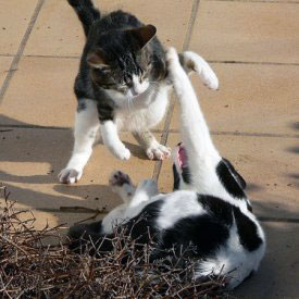 How to handle new cats showing aggression.