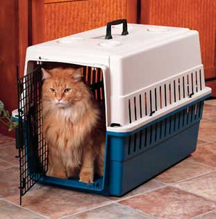 Bringing a new cat into your home