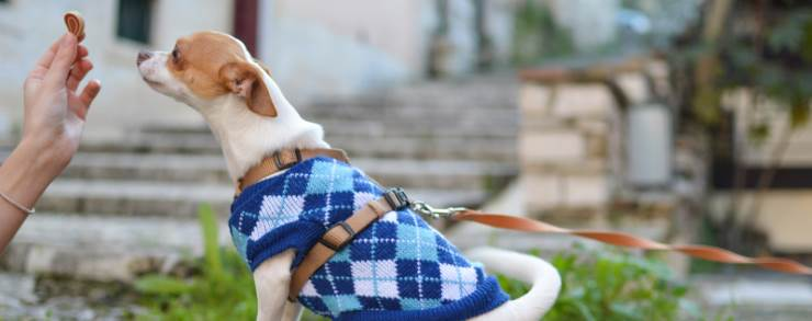 Learn about dog food allergies