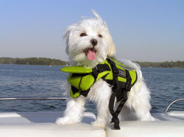small dog wearing life vest on boat