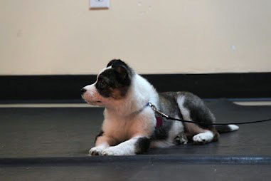 puppy laying on floor