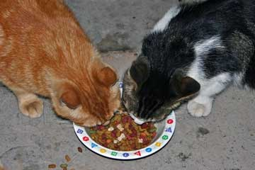 Two cats eating from same bowl